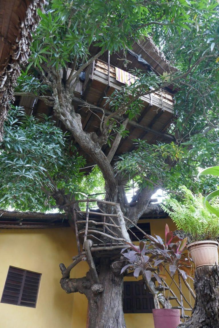 Vue chambre dans l'arbre sur nosy be